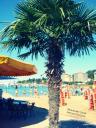 Urlaub in Slowenien - Palme